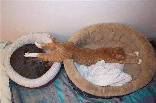 Kedi halleri