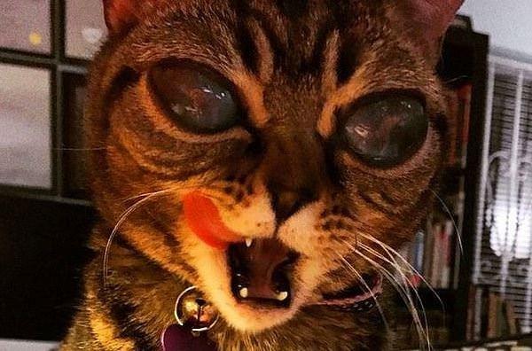 İnternetin yeni fenomeni kedi Mati