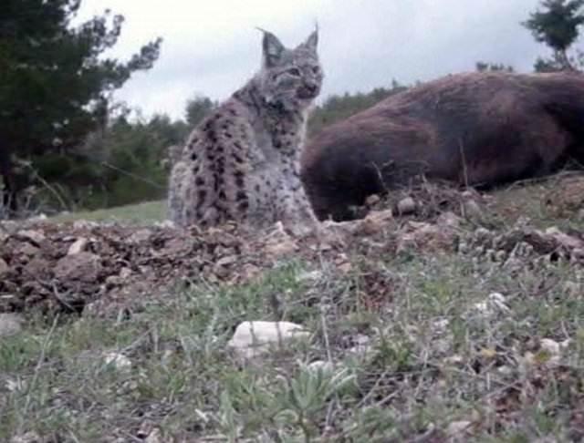 Anadolu'nun nesli tükenen hayvanları
