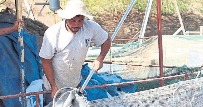 Denizi olmayan kent dünyaya balık satıyor