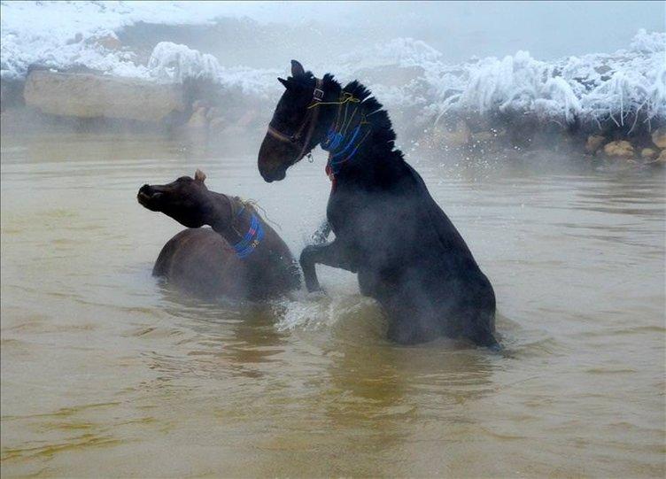 Manda ve atlarını kaplıca suyunda yıkıyorlar