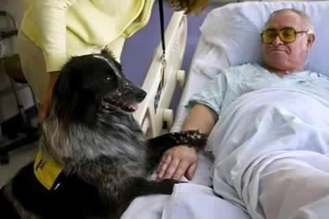 Terapi Köpekleri