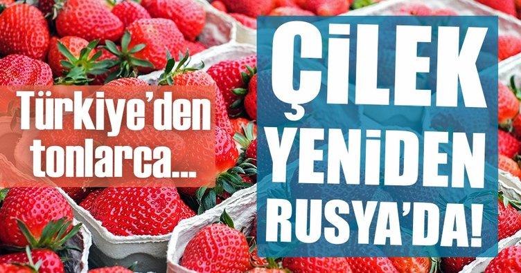 Türk çileği yeniden Rusya'da