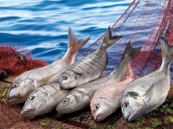 Bayat balığı anlamanın yolları!