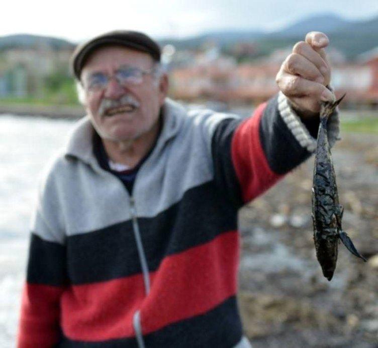Ölü balıklar kıyıya vurdu