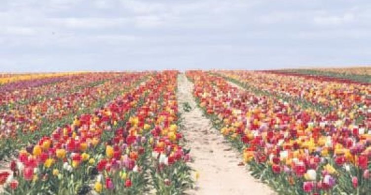Anadolu'nun renklerine tur