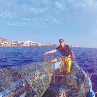İtalyan balıkçıları yunuslar bezdirdi