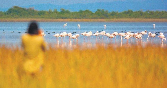 Türkiye'nin kuşları belgesel oldu