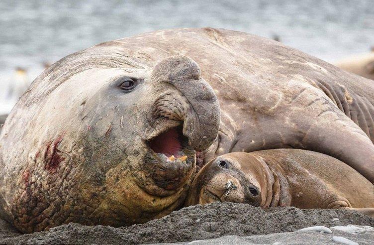 Deniz devlerinin kanlı randevusu