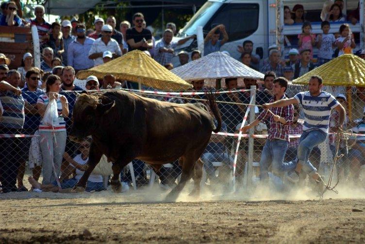 Muğla'da boğa güreşleri festivali