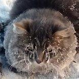 Soğuktan asfalta yapışan kedinin sonu bakın ne oldu