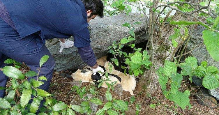 Köylülerin sahiplendiği 7 yavru köpeği zehirlediler