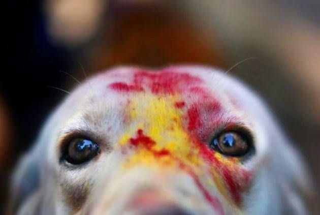 Köpekleri onurlandıran festival: Tihar