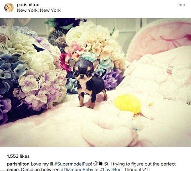 Paris Hilton köpeklere servet harcıyor!