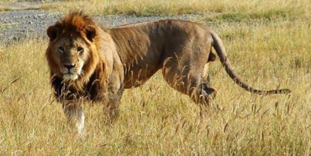 En çok insan öldüren hayvanlar!