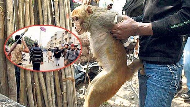 Maymun kavgasında 20 kişi öldü