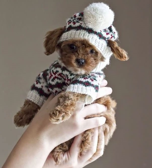 Hayvanlar için kış modası!