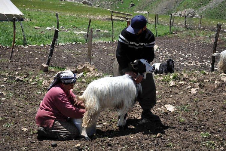 Tunceli halkı yaylalara güvenle çıkmak istiyor