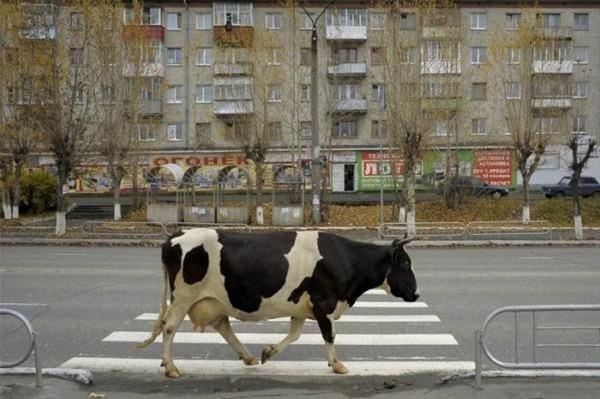 Sokaklara bir de böyle bakın