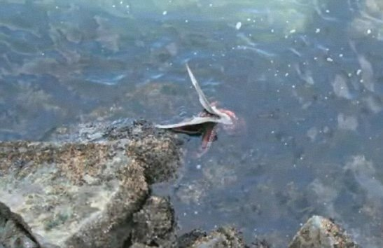 Ahtapotun avına inanamayacaksınız