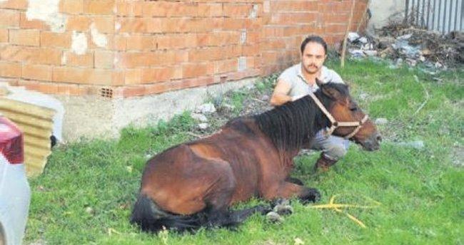 Zabıta ekipleri, ölüme terk edilen atı kurtardı