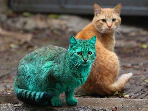 Yeşil kedinin sırrı çözüldü!