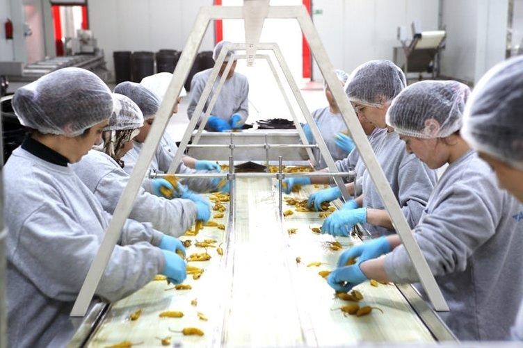 Üretime reform geliyor