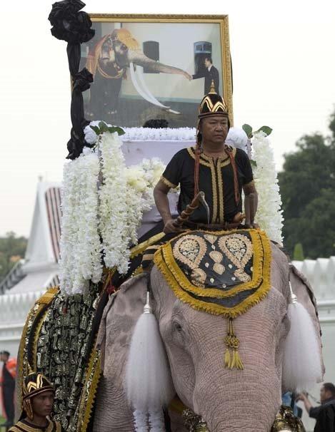 Tayland'da Kral Bhumibol'a saygı için 'Beyaz Fil' töreni