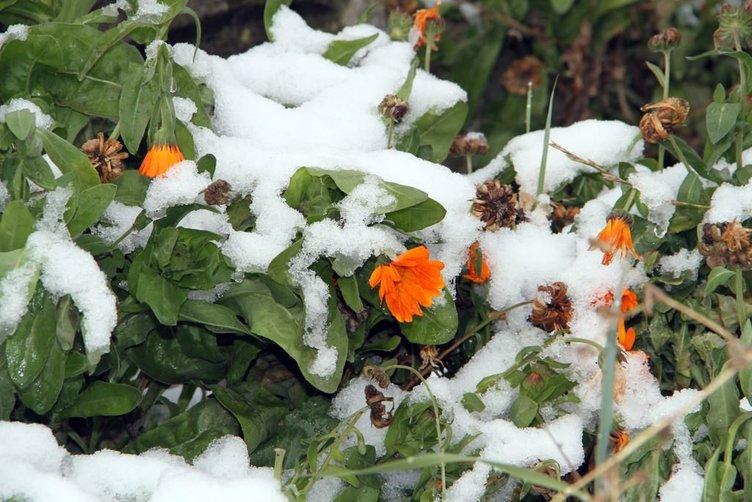 Ardahan'a ilk kar yağdı!