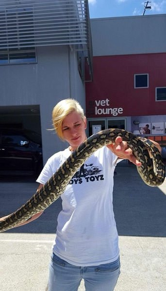Dev yılan yakalandı