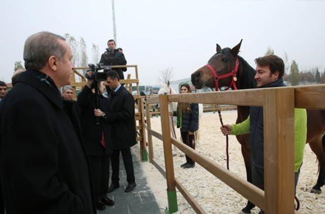 Erdoğan atları elleriyle besledi