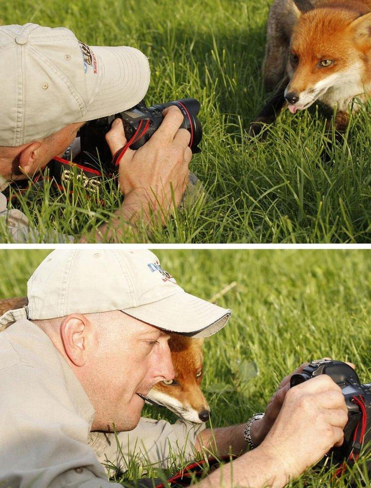 Doğadaki hayvanların fotoğraf merakı