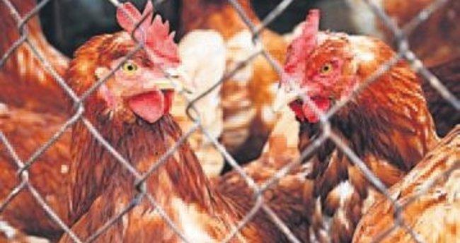 Salma tavukçuluğa Büyükşehir desteği