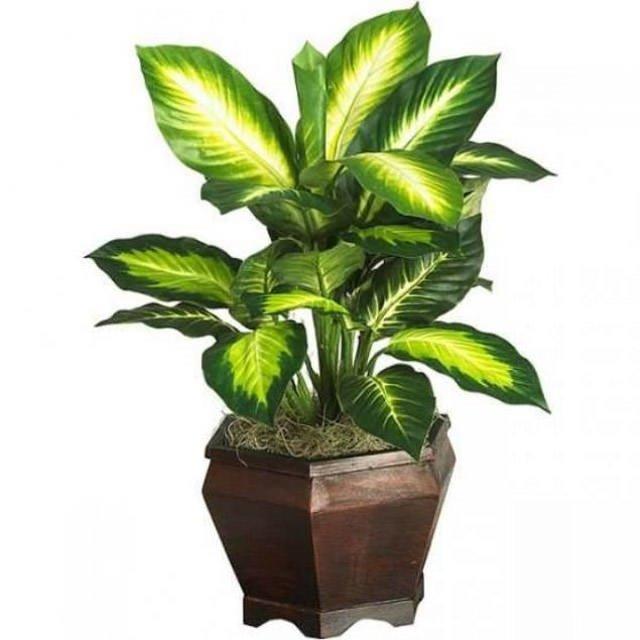 Bu bitki öldürücü olabilir!