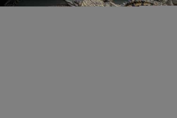 Endonezya'da timsahlarla korunacak hapishane tasarısı
