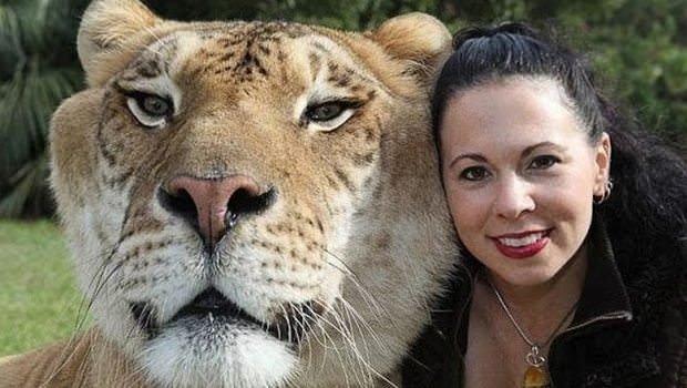 Hayvanlar aleminden daha önce duymadığınız 10 melez hayvan