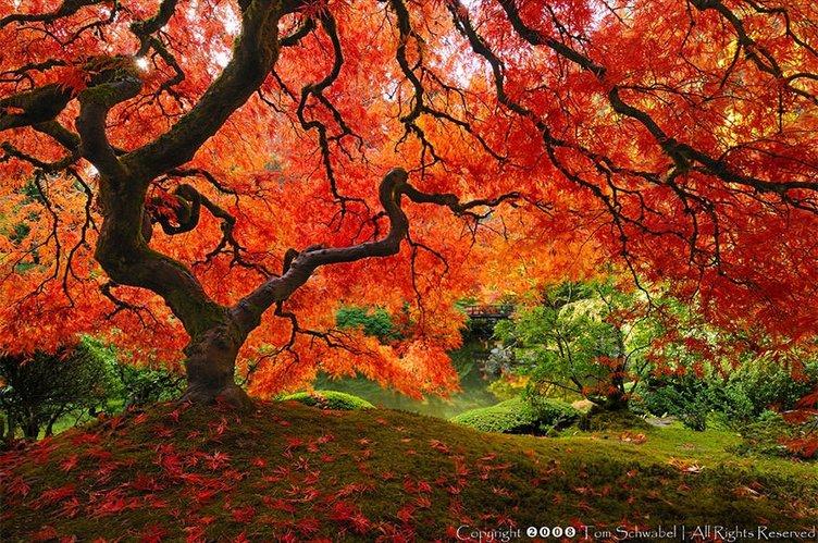 Doğanın mucizeleri