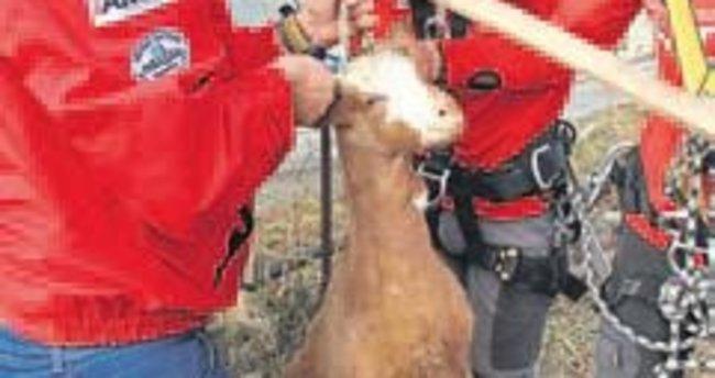 Kuyuya düşen keçi 2 saatte kurtarıldı
