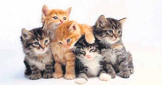 Kedilere icrayla tahliye kararı