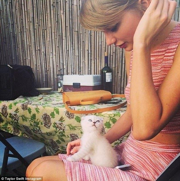 Taylor Swift'in kedi tutkusu