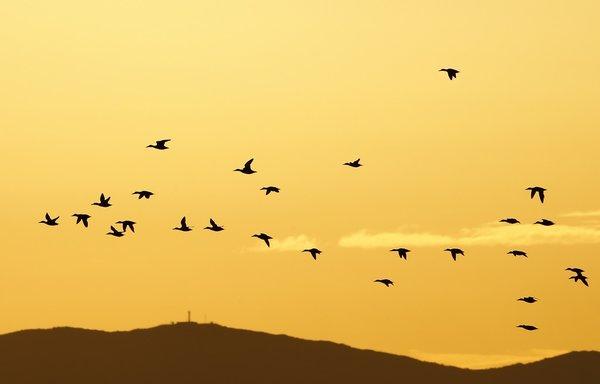 İzmir Kuş Cenneti güzellikleriyle büyülüyor