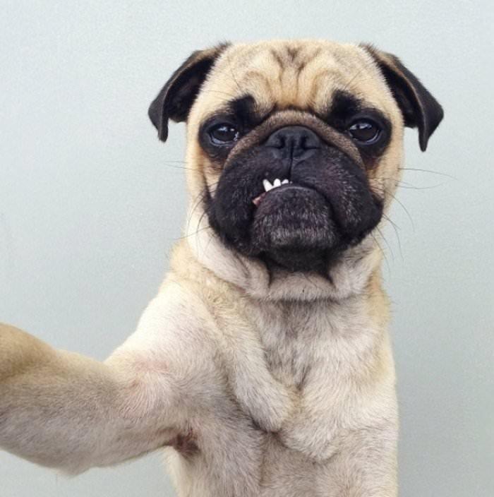 Selfie tutkusu olan şirin hayvanlar