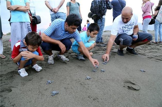 Caretta Carettalar'ın deniz yolculuğu