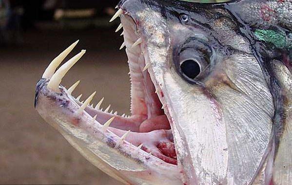 Dünyanın en ölümcül canlıları