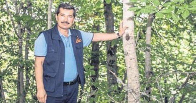 Ege'nin tek kayın ormanı Manisa'da