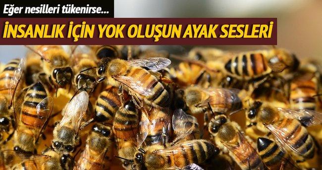 Arı nesli ilk kez tehlikede